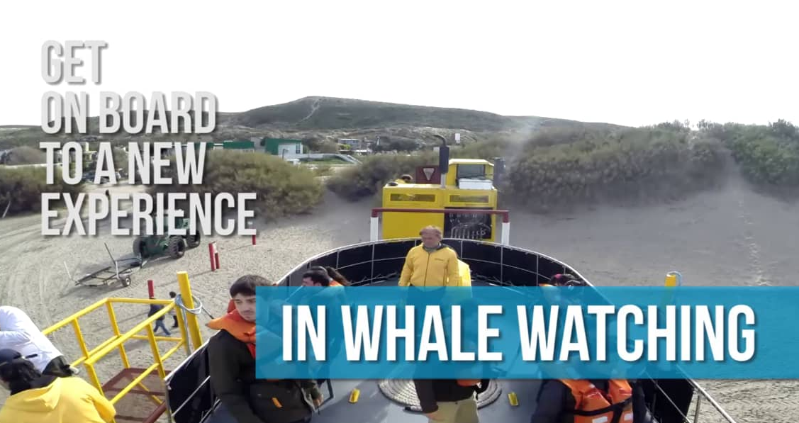 A new experience in whale watching