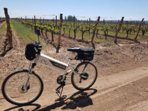 E-BIKE TOURS, WINE AND FOOD IN MENDOZA