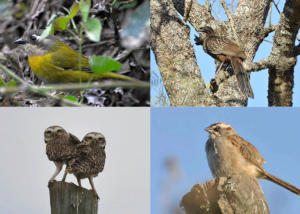 BIRDWATCHING IN THE CLOUD FOREST IN SALTA